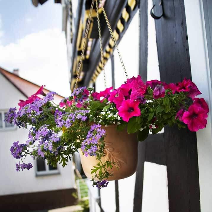 Blumen am Eingang vom Ferienhaus Moritz