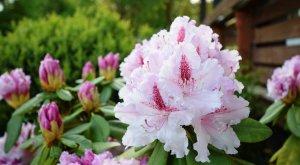Blumengarten